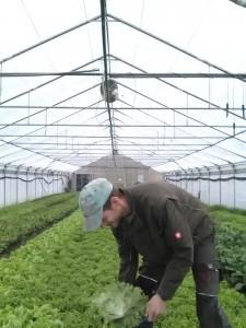 Bei der Ernte