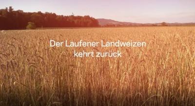 Der Laufener Landweizen kehrt zurück