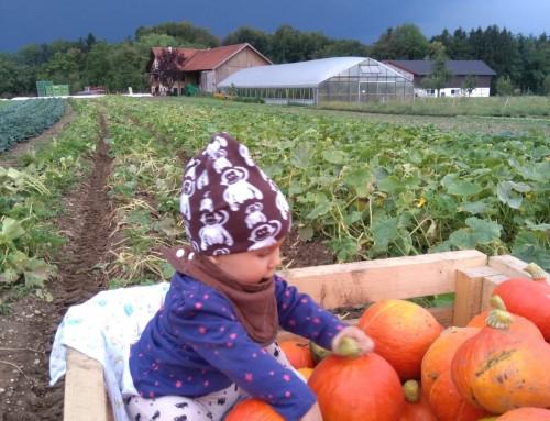 Herbstzeit ist Kürbiszeit! -25% auf Kürbisse