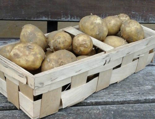 Die Kartoffel Saison ist eröffnet
